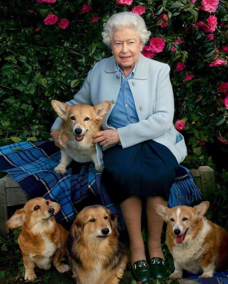 Королева Елизавета II с собаками